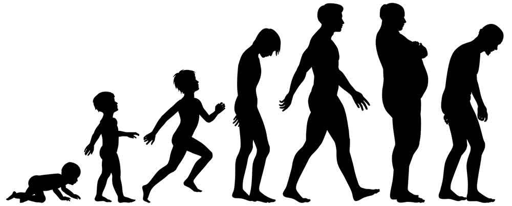 Human aging process