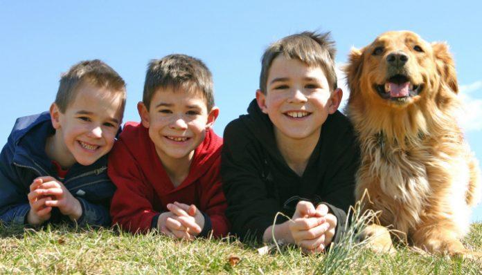 Benefits of Pet breeding