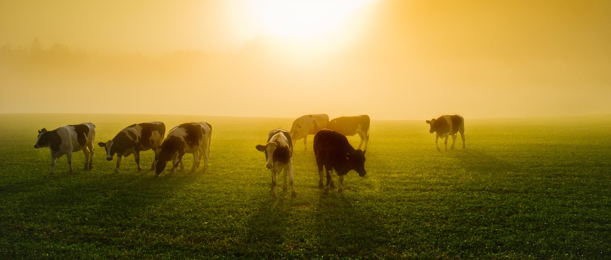 The benefits of the sun for humans, animals and plants