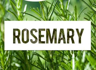 Benefits of Rosemary for the Paunch